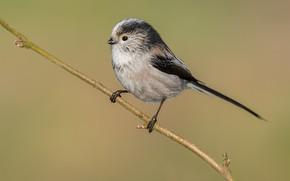 Picture nature, sprig, bird