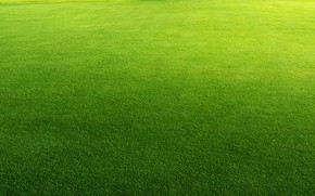 Picture greens, summer, lawn