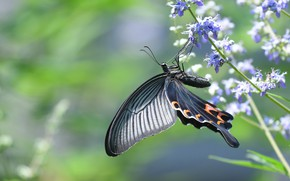 Picture macro, light, flowers, stems, butterfly, swallowtail
