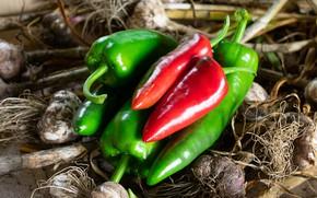 Picture harvest, pepper, garlic