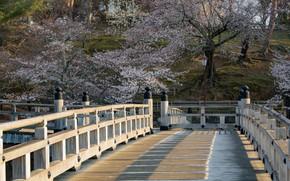 Picture Nature, Bridge, Spring, Trees, Sakura, Japan, Khans