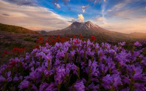 Wallpaper field, the sky, flowers, hills, Doug Shearer