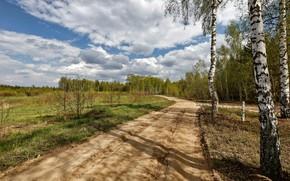 Picture road, nature, birch