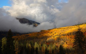 Picture autumn, forest, trees, mountains, fog, yellow