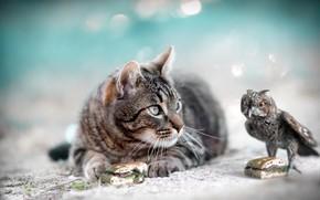 Picture cat, cat, grey, background, owl, bird, bird, sandwich, striped, figure, souvenir