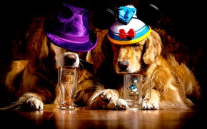 Picture dogs, glass, two, paws, mug, red, Golden, on the floor, muzzle, hats, lie, Retriever