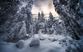 Picture winter, forest, snow, trees, landscape, nature, ate, the snow, Robert Didierjean