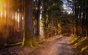 Picture road, forest, rays, light, branches, pine