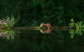 Picture greens, reflection, the dark background, protein, drink, pond