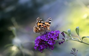 Picture summer, flowers, butterfly, treatment, red, inflorescence, lilac, bokeh, blurred background, motley