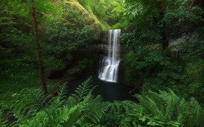 Picture greens, forest, trees, thickets, vegetation, waterfall, fern