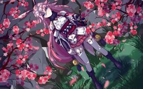 Picture girl, flowers, Sakura, Benghuai Xueyuan