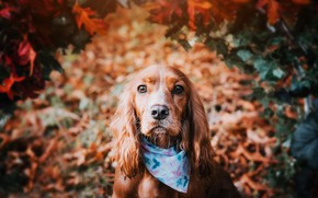 Picture each, dog, shawl
