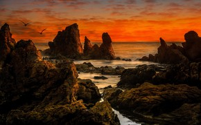 Picture landscape, sunset, birds, nature, stones, the ocean, rocks, CA, USA