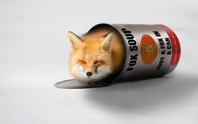 Picture muzzle, Fox, Bank