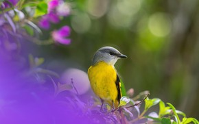 Picture bird, bokeh, Caregory long-tailed licenced