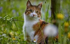 Picture cat, summer, grass, look, face, leaves, flowers, nature, pose, branch, dandelions, sitting, bokeh, spotted, motley