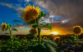 Picture field, the sun, clouds, rays, sunflowers, landscape, mountains, nature