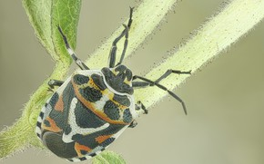 Picture background, beetle, a blade of grass, bug