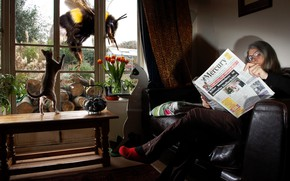 Picture cat, woman, the situation, grandma, window, newspaper, bumblebee, reading, giant, pensioner