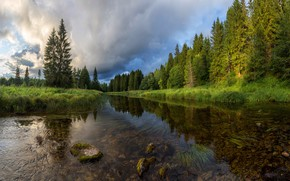 Picture forest, summer, trees, nature, river, Vaschenkov Pavel