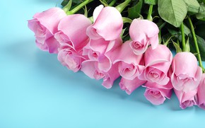 Picture flowers, roses, bouquet, pink buds