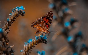 Picture wallpaper, animals, nature, blue, butterfly, flowers, macro, blur, insects, 4k ultra hd background