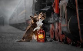 Picture train, the engine, the platform, lantern, a couple, friends, two dogs, Svetlana Pisareva