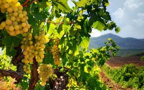 Picture The sky, Nature, Clouds, Nature, Clouds, Sky, Crimea, Crimea, The vineyards, Vineyards