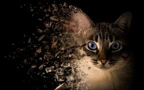 Picture cat, cat, look, face, rendering, photoshop, portrait, treatment, pieces, black background, blue eyes, fly, annihilation, …
