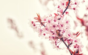 Picture Flowers, Nature, Color, Spring, Flower, Leaves, Plant, Garden, Branch, Branches, Plants, Nature, Cherry, Flower, Flowers, …