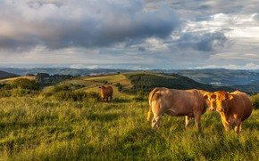 Picture greens, field, animals, summer, grass, look, clouds, light, landscape, mountains, hills, two, dal, the evening, …