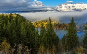 Picture forest, clouds, mountains