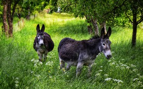 Picture grass, trees, flowers, branches, nature, garden, pair, two, donkey, donkey, donkeys, donkeys