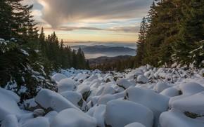 Picture winter, forest, snow, landscape, mountains, nature, boulders, курумы
