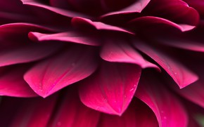 Picture red, flower, close up