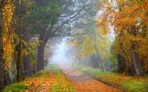 Picture road, autumn, forest, leaves, trees, branches, nature, fog, Park, branch, foliage, morning, yellow, track, alley, ...