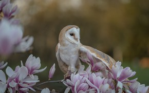 Picture flowers, branches, background, owl, bird, flowering, bokeh, Magnolia, The barn owl