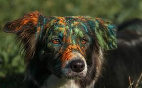 Picture face, paint, dog, выпачкалась