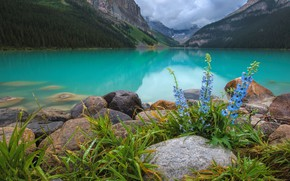 Picture flowers, mountains, lake
