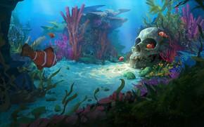 Picture clown fish, the bottom of the sea, fish, skull