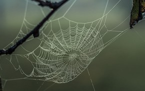 Picture autumn, nature, web