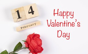 Picture rose, 14 Feb, Valentine's day