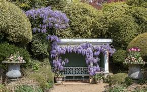 Picture Park, photo, Tulip, England, Wisteria, Ascott House gardens