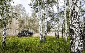 Picture Forest, Sport, Machine, Truck, Race, Master, Birch, Russia, Kamaz, Rally, KAMAZ-master, Rally, KAMAZ, RedBull, Master, …
