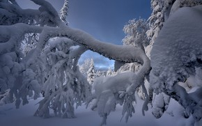 Picture winter, snow, trees, branches, nature, Межин Сергей