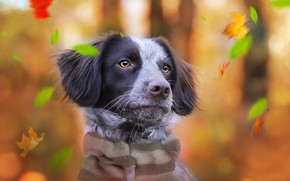 Picture autumn, background, each, dog
