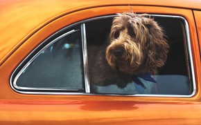 Picture situation, cute, Dog, car, animal