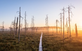 Picture Finland, Land Of The Dead, Patvinsuo National Park