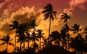Picture tropics, palm trees, the evening